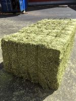 DEHYDRATED ALFALFA HAY VERY GREEN COLOR