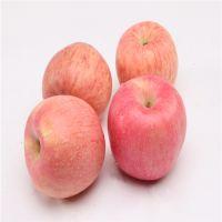 Hot Sell Fresh Apple