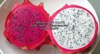 FRESH/FROZEN/DRIED DRAGON FRUIT (PITAYA FRUIT)