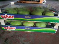 Santa Maria pears