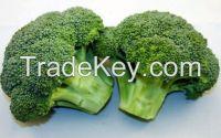 Hot Sale Natural Fresh Broccoli