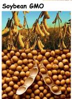 Soybean GMO