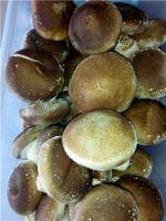Xianggu mushroom