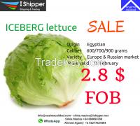 ICEBERG LUTTICE