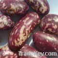 purple speckled kidney beans