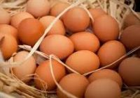 Quality Organic Fresh Chicken Table Eggs & Fertilized Hatching Eggs, White and Brown Eggs