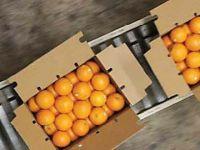 Kinnow Mandarin Oranges