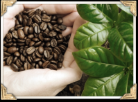 100% Arabica Bresilian Coffee
