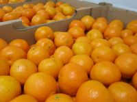 Sweet Fresh mandarin orange/Fresh Orange, Naval Orange, Valencia Oranges