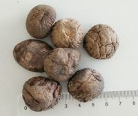 3KGS Pack Brown Dried Smooth Shiitake Mushroom Whole with Cap 3-4CM