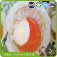 Frozen half-shell sea scallop