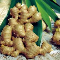 Vietnam Fresh Ginger with hot price