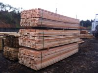 Teak wood, Eucalyptus, Pinus