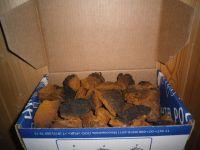 Chaga Mushroom