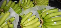 Fresh G9 Cavendish Banana