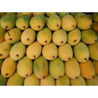 Vietnam fresh mango