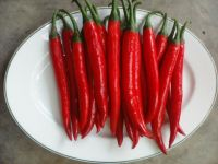 Red Fresh Chilli