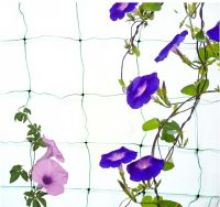 High tensile extruded oriented PP plant support trellis netting