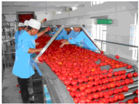 TOMATO PASTE PLANT/MACHINERY