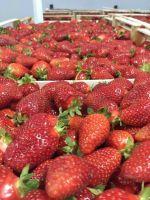 Fresh Cherries and Fresh Strawberries