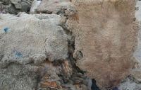 Donkey Hides Wet Salted Donkey Hides Wet Salted Cow Hides Wet Blue Cow Hides