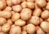 Fresh Irish Potatoes For Sale & Export