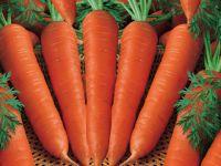 Vietnam Fresh Carrot