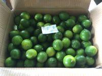 Best Offer for Fresh Lime/Lemon From VietNam
