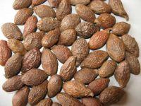 Viet Nam Malva nut for Health/ Skin Beauty (WhatsApp/ Wechat/ Skype +84 1676540581)