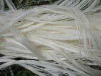 100% pure White Sisal Fibre for sale