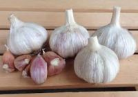 Garlic, Natural White, Purple, Elephant, Peeele