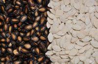 Canola Seed