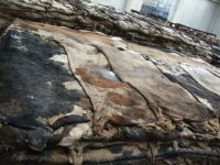 SALTED DONKEY HIDES / WET OR DRY SALTED DONKEY HIDES