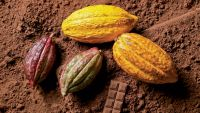 Best Quality Cocoa Powder