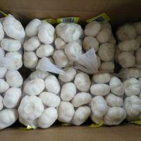 Fresh Normal White Garlic And Pure White Garlic
