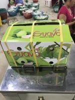 Fresh guava exporter Vietnam original with high quality