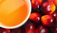 Palm Oil Available For Sale And Export