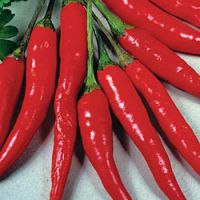 Red Chilli | Spices | Chilli Peppers