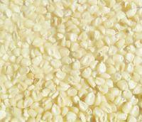 Non Gmo White And Yellow Maize/Corn
