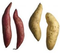 Fresh Sweet Potatoes For Sale And Export