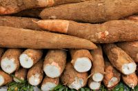 Fresh Cassava And Cassava Chips For Sale