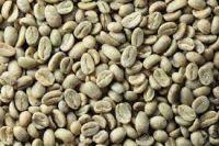 Green Arabica Organic Coffee Beans