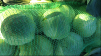 High-Quality Cabbage By Wholesale