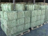 Alfalfa Hay, Lucerne Hay bales & other Animal Feeds For Sale