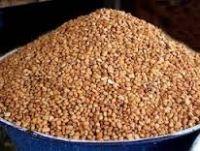 Honey Beans   ORGANIC BEANS