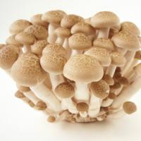 Preserved Mushroom