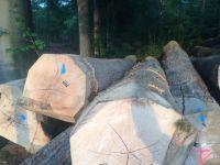 European oak logs