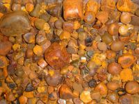 Cow Gallstone