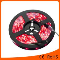 5050 RGBled flexible strip light 30led/m waterproof led light strip for Chrismas lighting