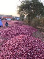 Exporter of High Quality Onion